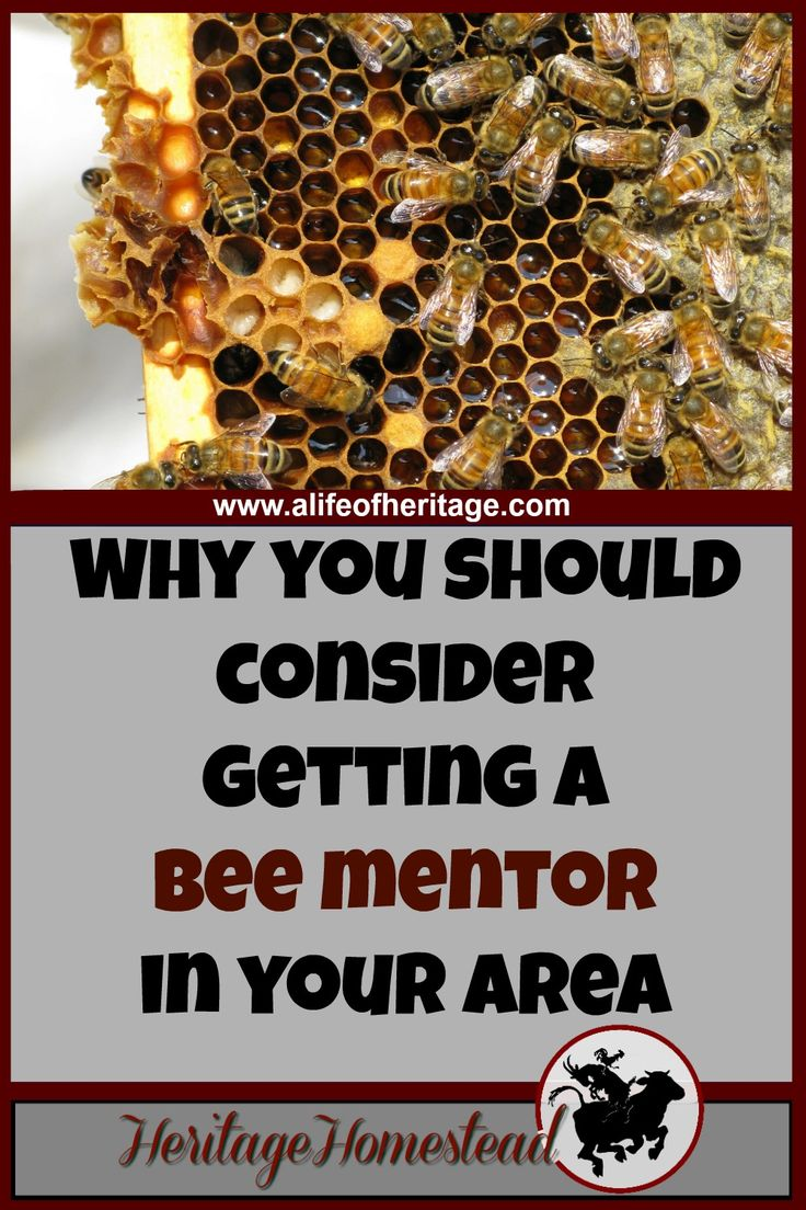 Bees   Bee Care   How to care for bees   Bee mentor   Finding a bee mentor can be the key to your success. You don't need to know everything about bees, you just need to know someone else who knows everything.