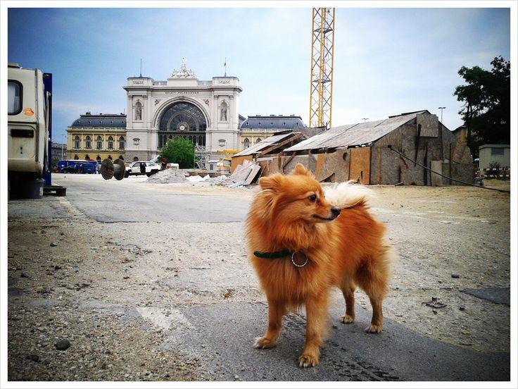 Cigánytábor kutyával