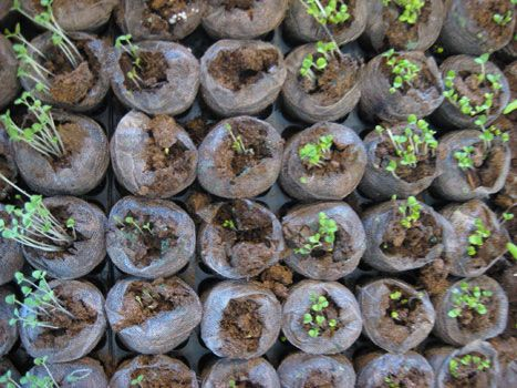 12 Best Images About Starting A Garden From Seeds On