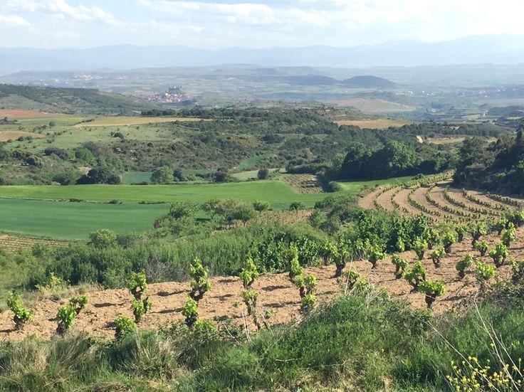 La Rioja alta, Spain