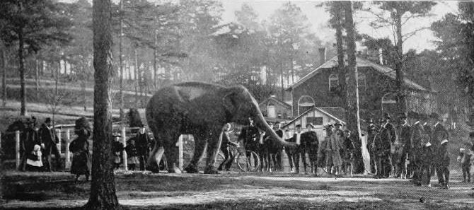 In 1889 wealthy lumberman George V. Gress bought a bankrupt circus for its rail cars and wagons. He donated the animals—including a hyena, a jaguar, and a camel—to the city of Atlanta.