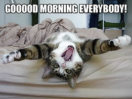 Funny Cat: Good Morning Everybody!