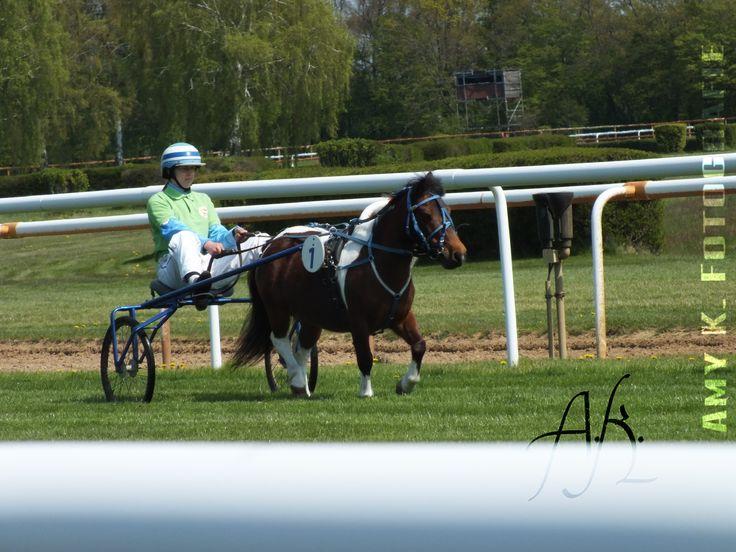 Minitraber-Cup, Annalena S. mit Jonny, Neue Bult, Langenhagen, 01.05.2016