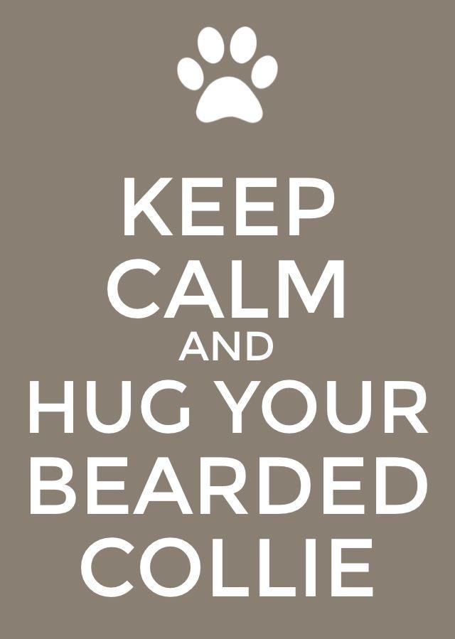 Bearded collie- Maisie