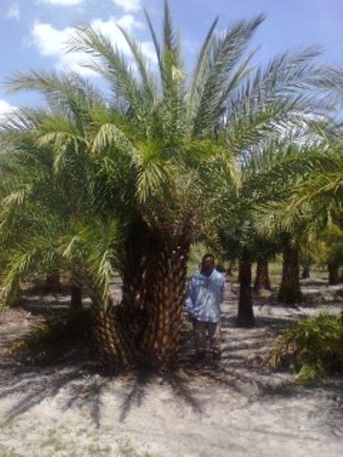 Miami florida dating sites