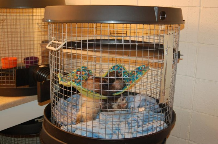 Kinkajou Cage Ideas Woogwam ferret cages - home ferret ideas pinterest