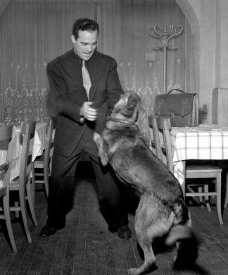 Marcel Cerdan (1916-1949), boxeur français. Paris, 1947. Photographie de Roger Berson.