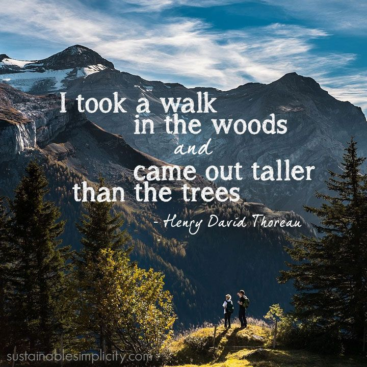 Woods Quotes: I Took A Walk In The Woods And Came Out Taller Than The