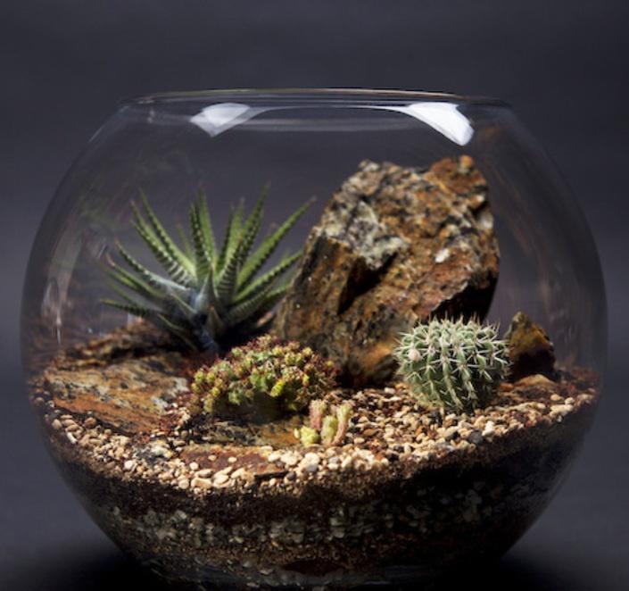 Cactus Terrarium - LARGE