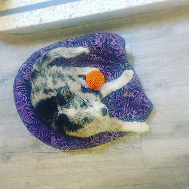 Reposting @alvarbshark: Azúl a punto de descargar la tormenta . . . . . #dog #dogsofinstagram #cute #puppy #dogs #love #instadog #dogstagram #pet #photooftheday #doglover #instagood #dogoftheday #friends #happy #smile #ilovemydog #pets #animals #fun #animal #like4like #lol #cool #hot #petstagram #puppies #dogsofinsta #pup #doglife
