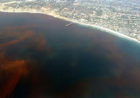 ¿Qué es la marea roja que afecta a algunas playas?