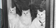 How to Make Homemade Cat Litter   eHow.com
