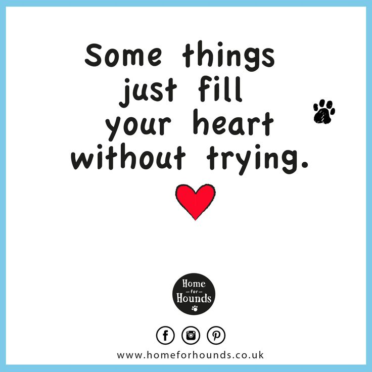 Some things just fill your heart without trying. #‎dogdaycare #‎quoteoftheday #‎inspiration #‎doglove #‎loveyourpets #‎bestfriends #love #fourleggedfriend #happiness #happyheart