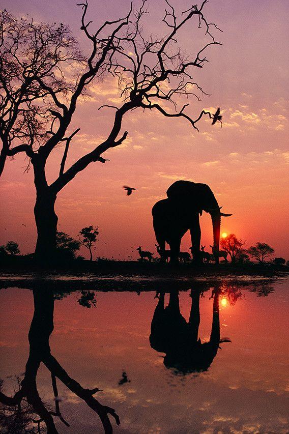 アフリカの野生動物、あくびするカバなど