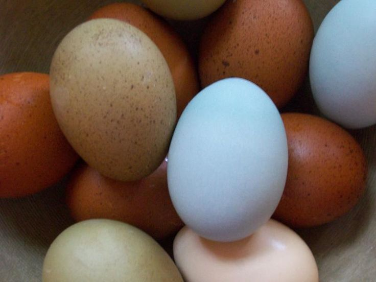A mail order place for specialty fertilized eggs for hatching. And reasonable prices, too.