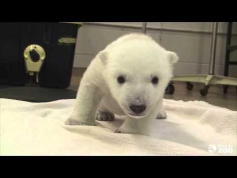 Cubs First Steps