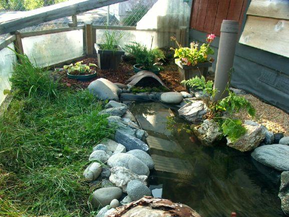 Backyard box turtle habitat. | Critters | Pinterest ...