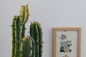 "Exposición ""Entre pinos y secuoyas"" de Paula Velasco y Maitane Azparrén"