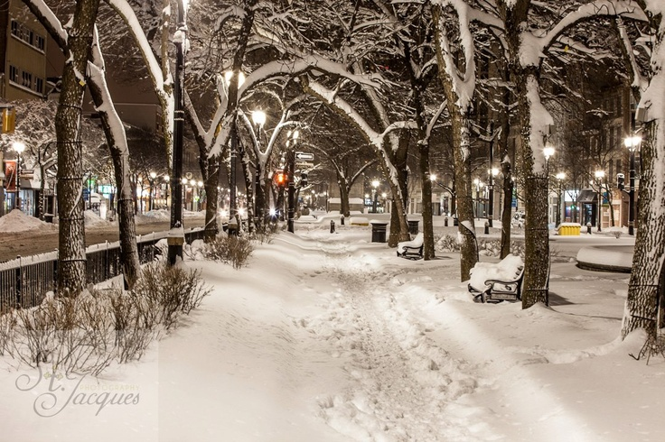 Gore Park in Hamilton, Ontario after a snow storm at night.  Trees over walking pathway. Long exposure.