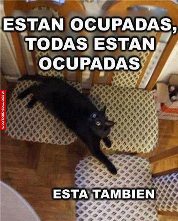 Están todas ocupadas… #gatos #mascotas