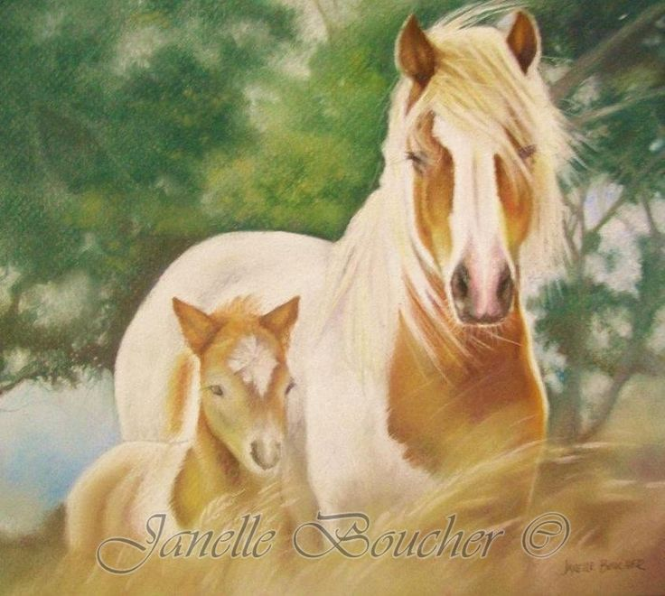 Painted Ponies , Thank you to Anne Jeffree for the beautiful reference photo .