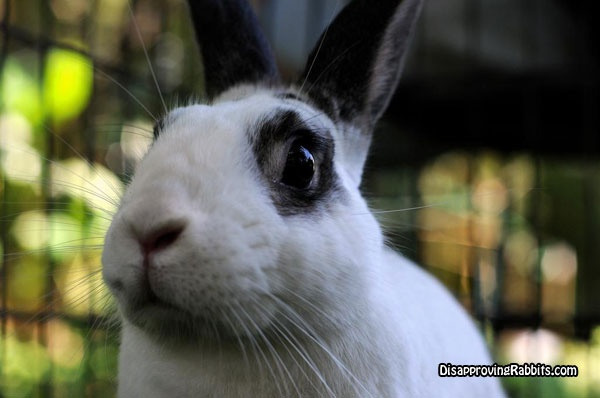 Your summer weekends   have been cancelled,due to   lack of interest on my part.Disapproving Rabbit, Beautiful Bunnies, Nice Shady, Pretty Darning, Big Wide, Darning Intresting, Breeze Infused, Bunnies Beautiful, Summer Weekend
