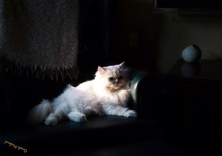 L'ombre et la lumière