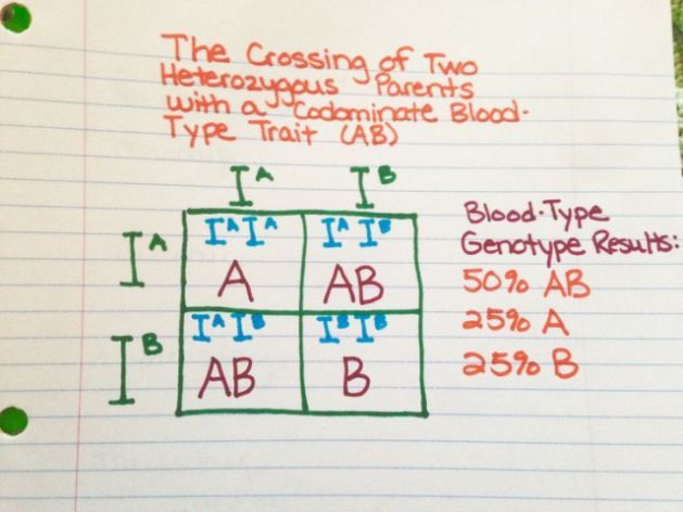 14 Best Honors Bio Images On Pinterest
