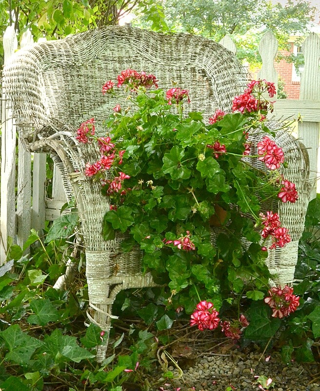 I love this....what a great way to use an old wicker chair