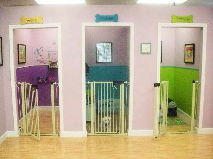 This would be cool in a finished basement for your puppies!