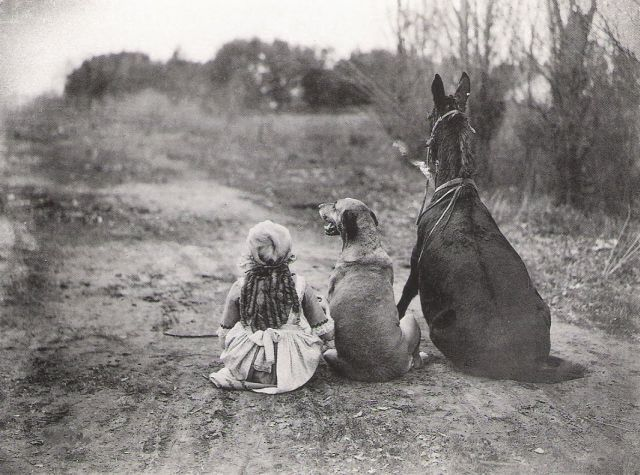 A kind of Goldilocks fairy tale — Vintage Animal Photos