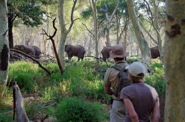 A guest describes the rich wildlife experience of Pafuri