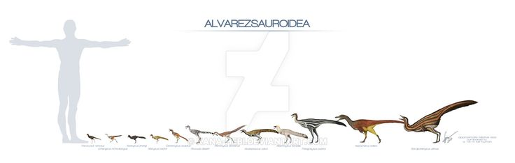 Alvarezsaurs were small dinosaurs... some taxa were among tiny, truly among the smallest of dinosaurs. Digital print available here on DA. If you want to buy it as a print go to my redBubble page!&...