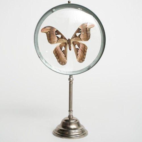 lupa-con-mariposa