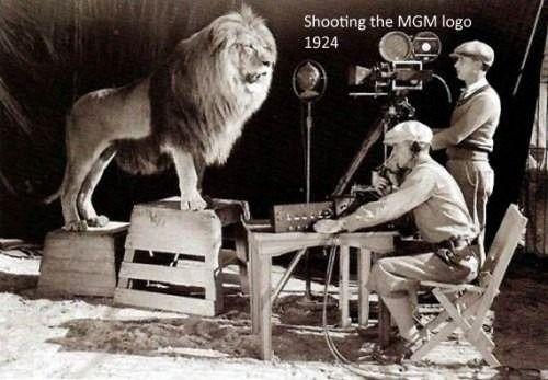 grabando al leon de la metro goldwyn mayer