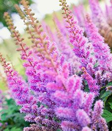 44 best flower gardens images on pinterest flower gardening bloom flowers that bloom late summer add end of season interest to the garden mightylinksfo