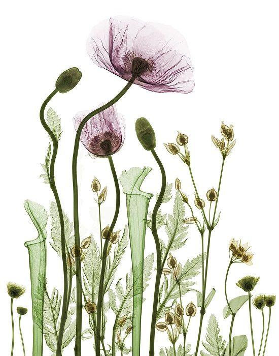 'X-ray flowers' - bara namnet lockar mig. Alltså föremål som fotas med hjälp av röntgenstrålar, vilket skapar den mest nakna och detaljrikaste strukturen av ett föremål. Se bara nedan!...