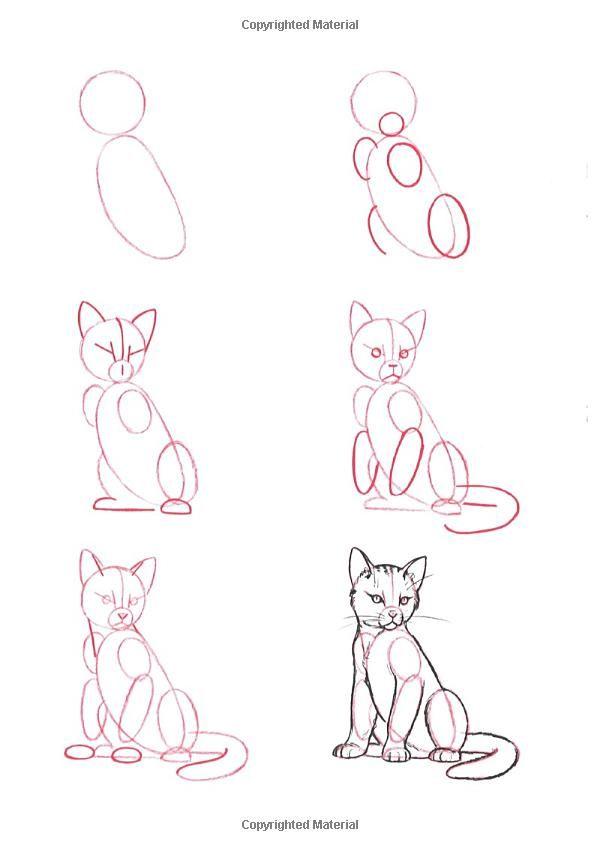 esqueleto de gato completo  Draw 50 Animals: Lee J. Ames: 9780385195195: Amazon.com: Books