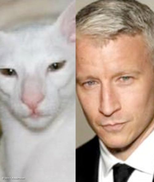 Look alike pets and their owners.