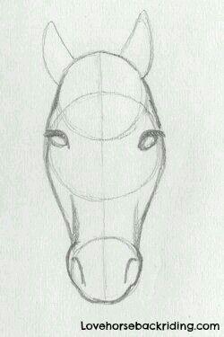 Horse Face Tutorial