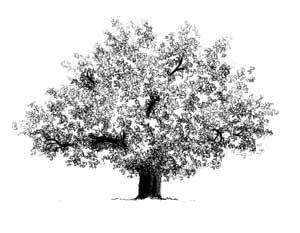 Randocroquis - Comment dessiner un arbre