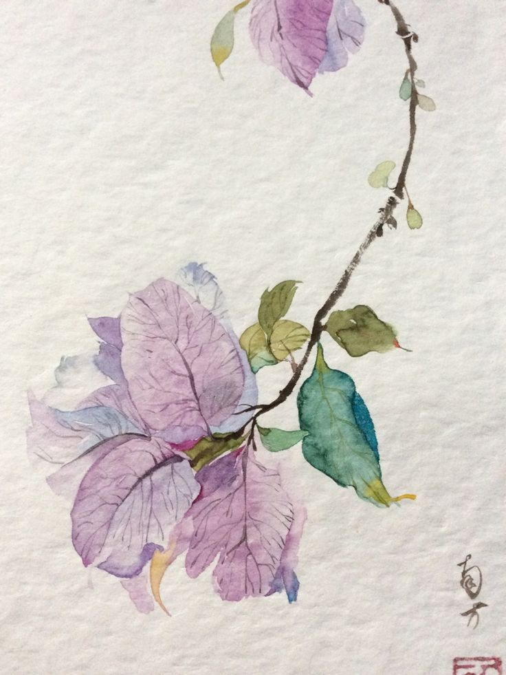 """Hand-painted watercolor flower illustration: Bougainvillea by-- illustrator Southern """"I had left it petals as leaves. Until now, too."""" from huaban.com"""