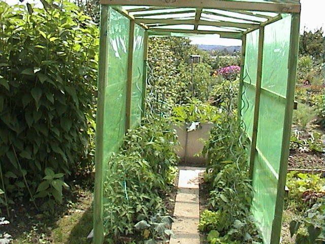 die besten 25 tomatenhaus ideen auf pinterest tomaten pflanzen spaliertomate und tomatenpflanzen. Black Bedroom Furniture Sets. Home Design Ideas