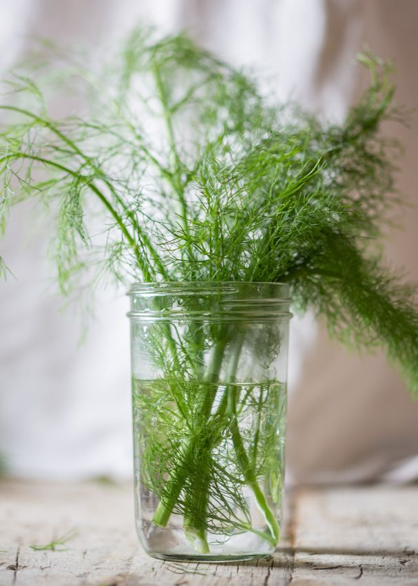 Styled #fennel #fronds #foodphotography #foodstyling