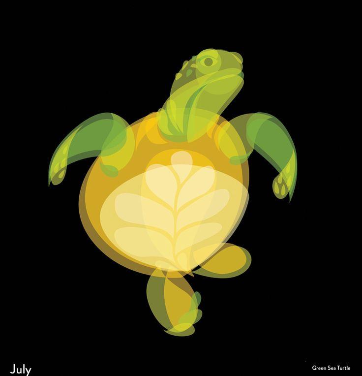 Fluid Animals: Turtle || Ben the Illustrator || http://bentheillustrator.prosite.com
