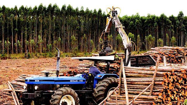 En la Argentina la forestación es mucha  a causa de las actividades agricolas