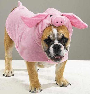 Одежда для собак | Домашние животные - кошки, собаки, грызуны, аквариумные рыбки, экзотические животные