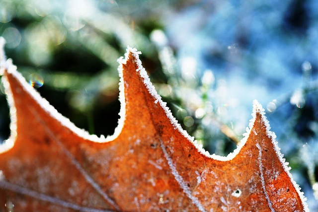 Morning frost upon the ground