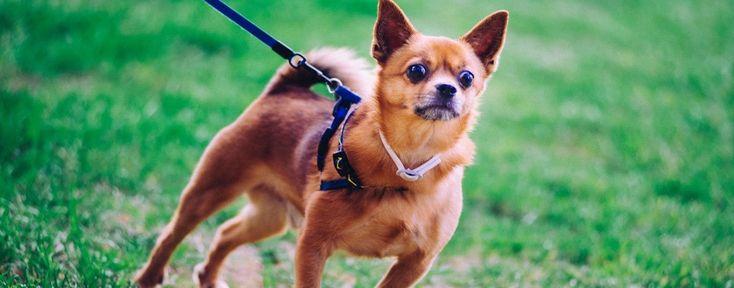 Εκπαίδευση Σκύλου από τη Valkanas Dogs. Μάθετε περισσότερα στο http://www.valkanasdogs.gr