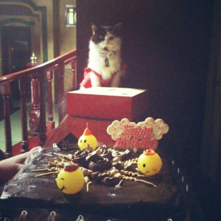 Bday Cake with Bday Cat..=)